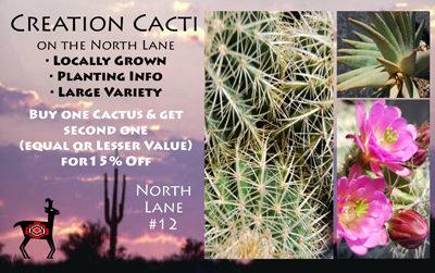 Creation Cacti